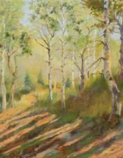 Aspen in the Sunlight
