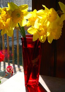 Photo of Daffodils in Vase