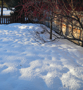 Photo of snow with purple shadows and orange sunspots